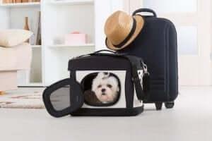 En hund inne i en reiseveske.