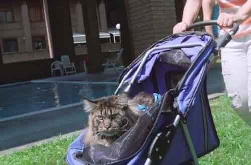 En katt som sitter i en vogn.