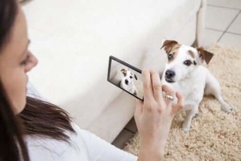 En kvinne som fotograferer en hund.