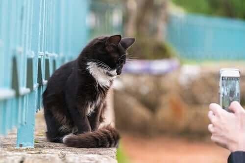 Ta bilder av kjæledyr: Hvordan få dem til å sitte stille