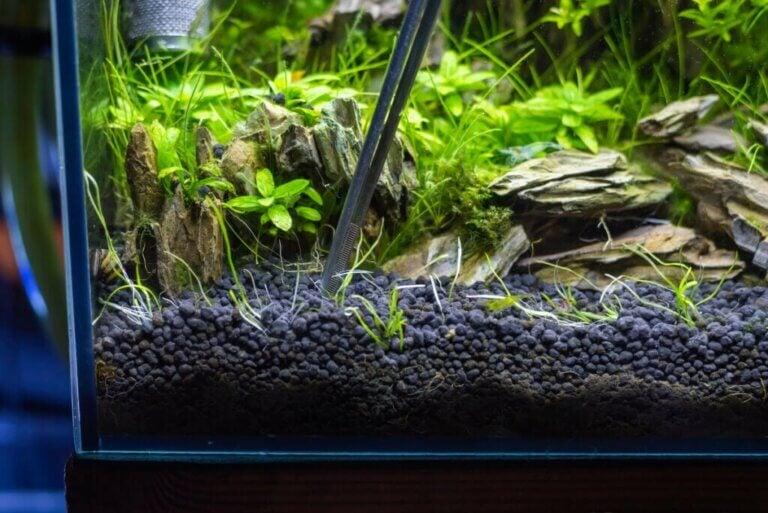 4 typer bunnlag for akvarier