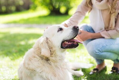 En hund som ligger på gresset og blir klappet