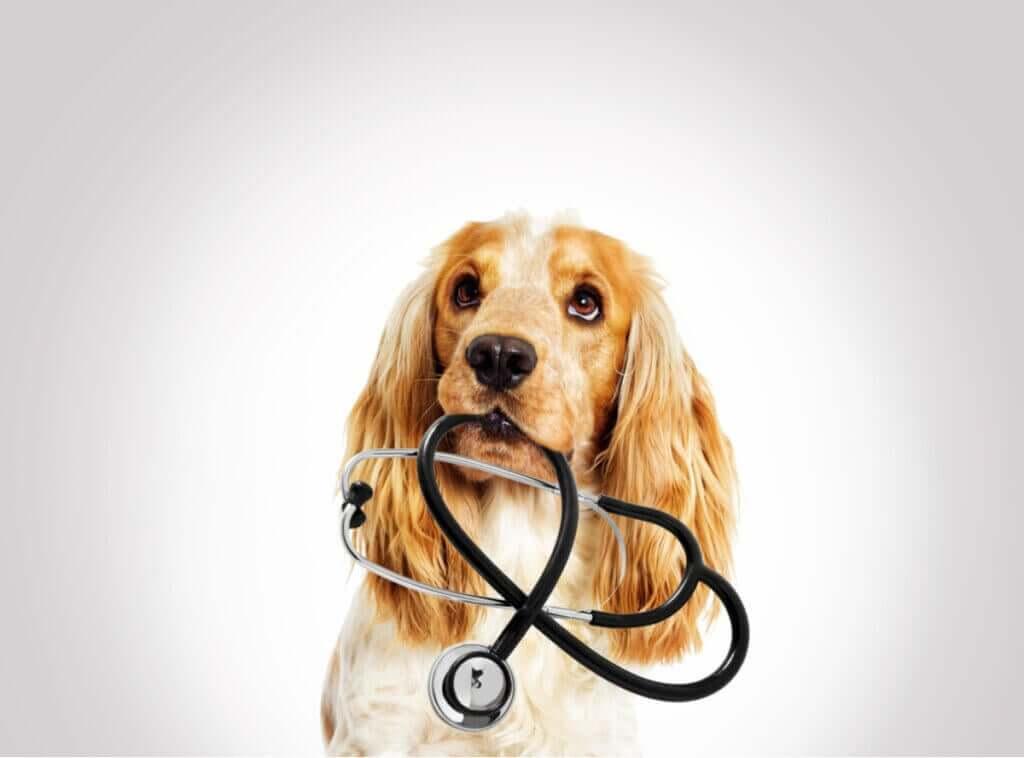 Hva forårsaker elektrolyttforstyrrelser hos dyr?