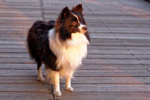 Forstå hundens personlighet og atferd