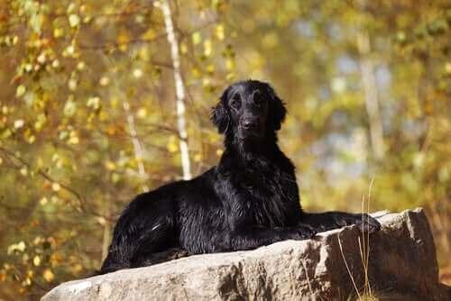 Hunder og hekseri: En kort historie
