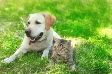 Tror du at hunder og katter kan være venner?