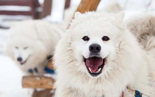Amazon sier at vi kan snakke med hunder i løpet av et tiår