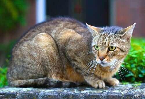 5 forskjellige typer personlighet hos katter
