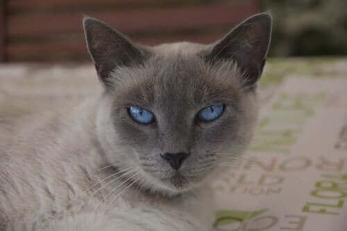 En katt som sitter på et teppe