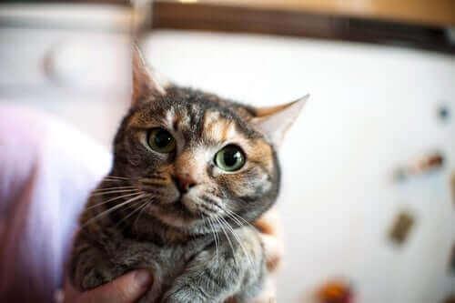 Kattepleie: Hvordan roe ned en nervøs katt