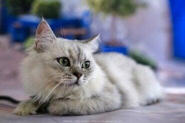 6 fascinerende fakta om kattens labber