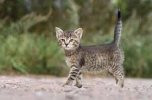 En kattunge som er ute