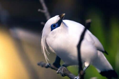 En fugl som sitter på en gren.