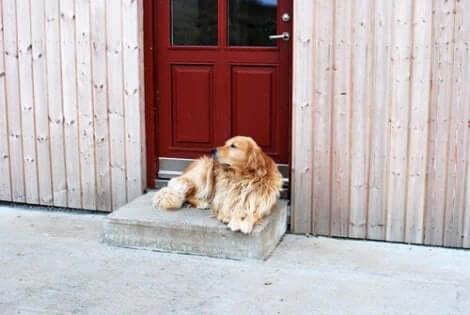 En hund foran en kennel.