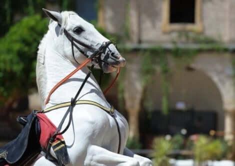 En percheron-hest.