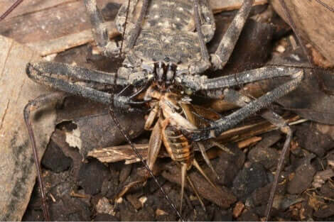 Et stort insekt som spiser et lite insekt.