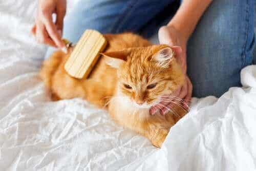 Hårballer hos katter - Hvordan håndtere dem