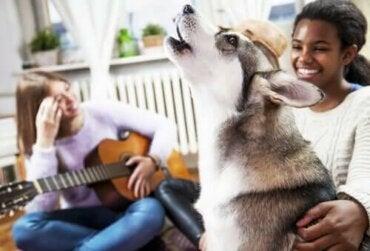 Hunder og musikk - Har dyr en musikalsk sans?