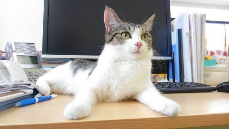Selskapet som adopterte katter for å lindre stress