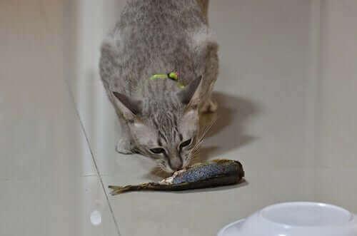 Bør du gi kjæledyrene dine fisk?