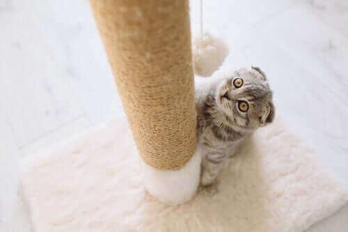 Alt om klorestativ til katter