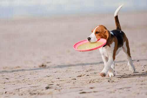 Ideer til sommerleker med kjæledyr