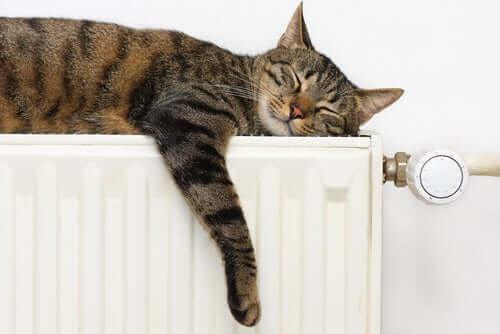 En katt som sover på en radiator
