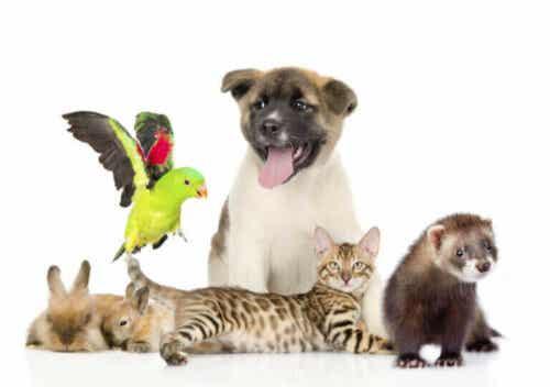 Det er viktig å fremme ansvarlig vergemål for kjæledyr