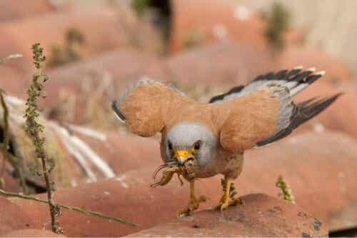 En fugl som holder et insekt.