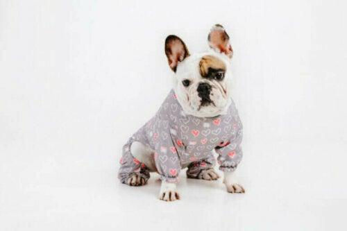 Er det behagelig å bruke klær for hunder?
