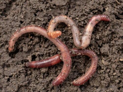 Oppdag hvordan mark reproduserer seg