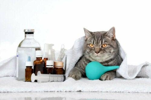Seks genetiske sykdommer hos katter