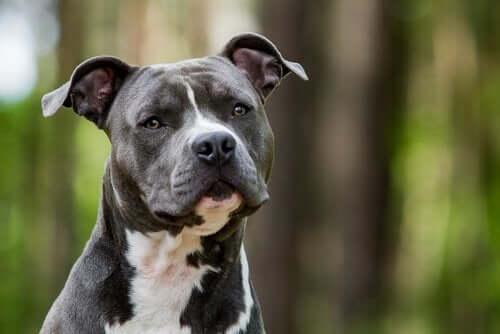 Finnes det hunderaser som krever lite?