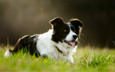 Hund blir millionær ved å arve 5 millioner dollar fra eieren