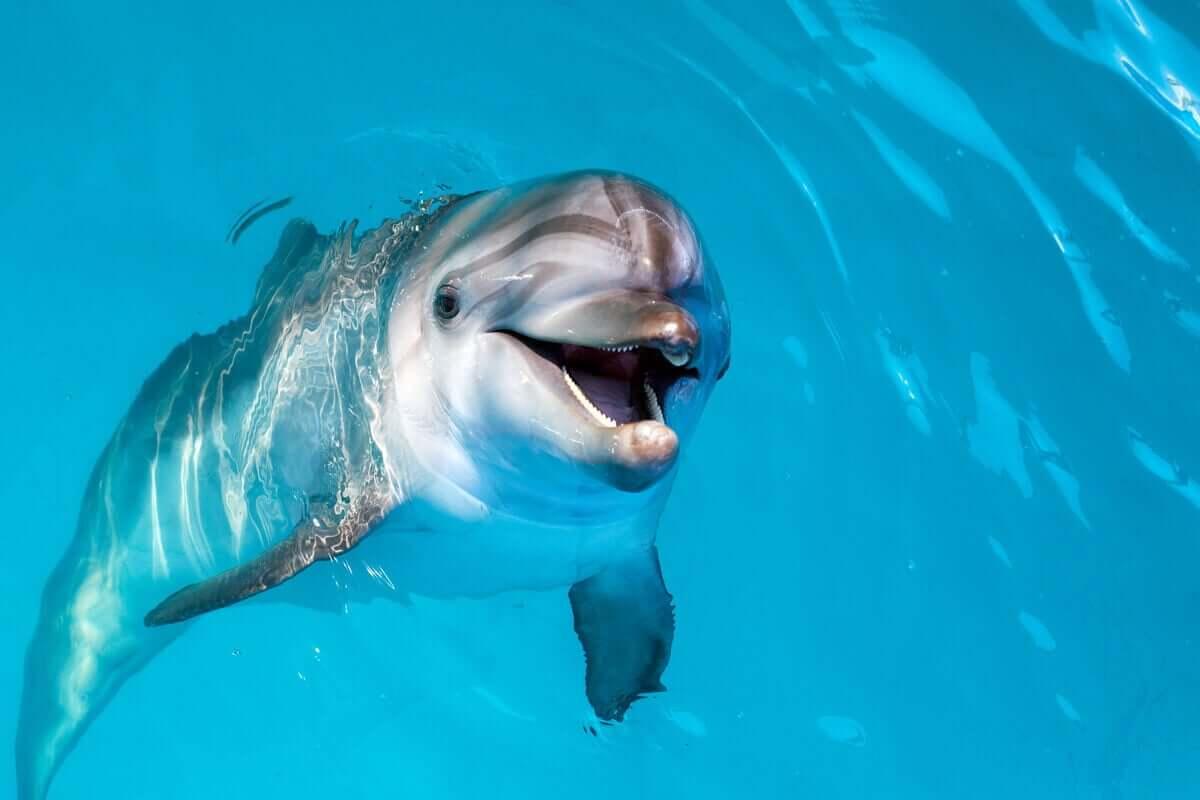 Delfiner kan bli deprimerte