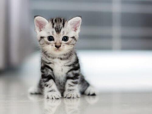 Hvor raskt vokser katter?