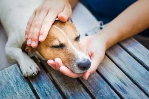 Sjekk disse åtte tipsene for å behandle forkjølelse hos hunder