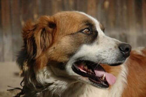 Hva du skal gjøre når hunden din brekker seg