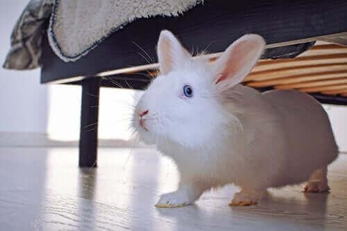 Holde kaniner som kjæledyr: Alt du trenger å vite