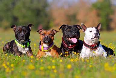 Lykkelige hunder