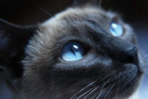 katteøyne