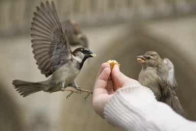 To fugler blir matet for hånd