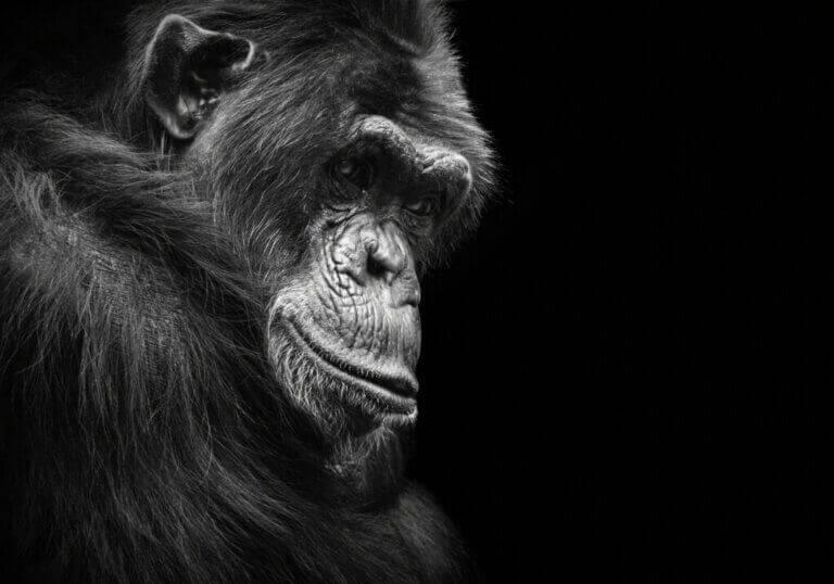 6 dyr som kan lide av depresjon
