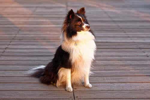 En hund som venter på eieren sin.