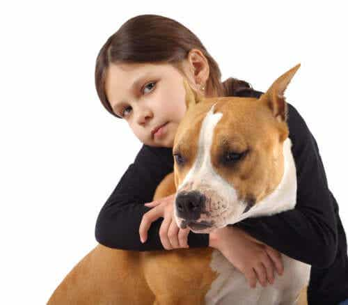 En jente med sin amerikanske bulldog.
