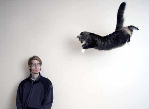 En katt som hopper fra et høyt sted.
