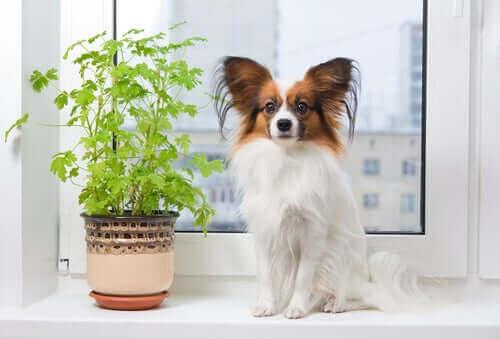 Oppdag syv populære franske hunderaser