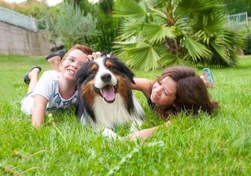 Stor hund eller liten hund: Et barns beste venn
