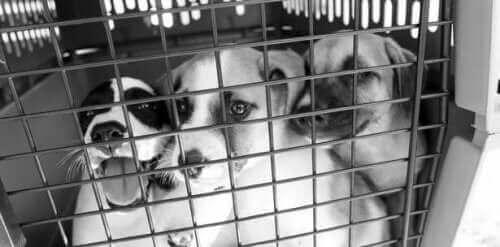 Håp om et liv for hjemløse hunder