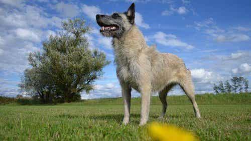 En hund i et felt